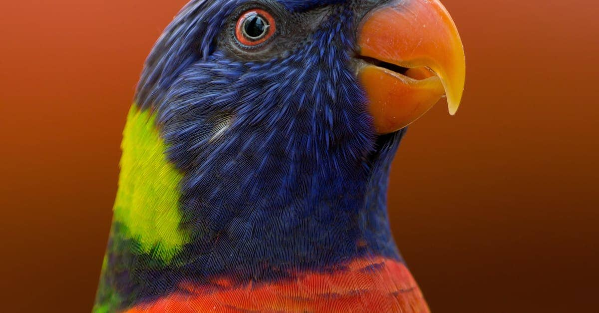 A colorful bird standing in front of a parrot