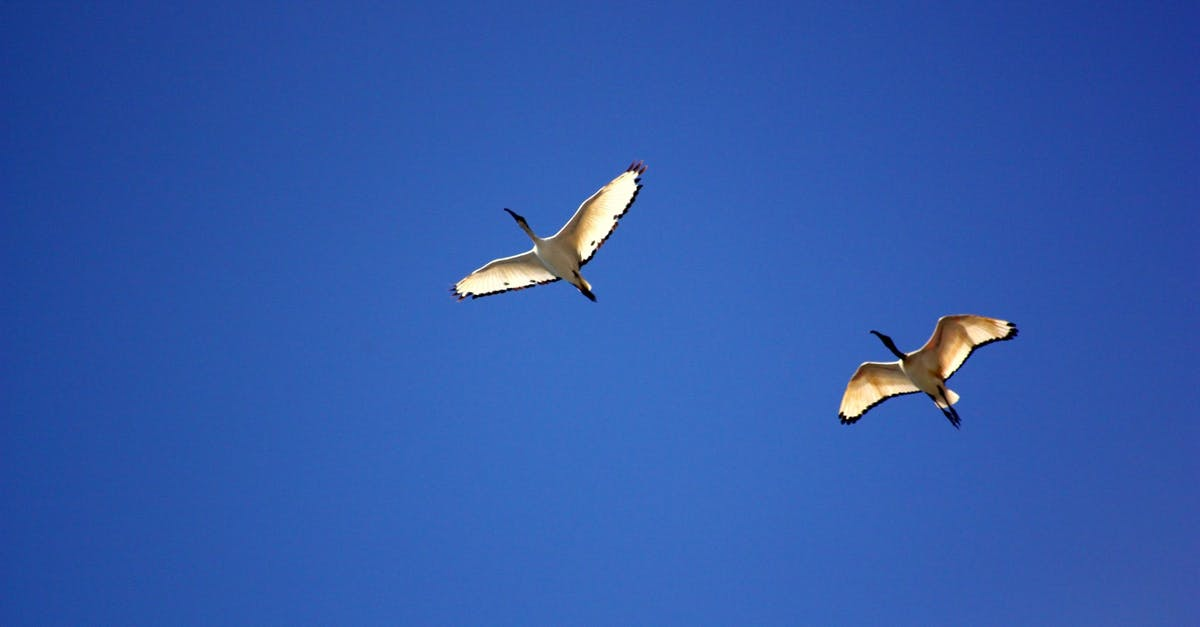 A bird flying in the air on a clear blue sky
