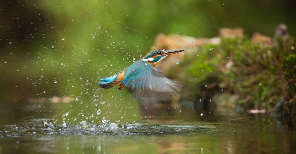 A bird swimming in water