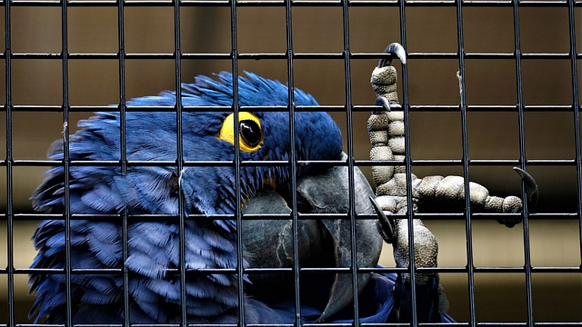 A parrot sitting on top of a cage