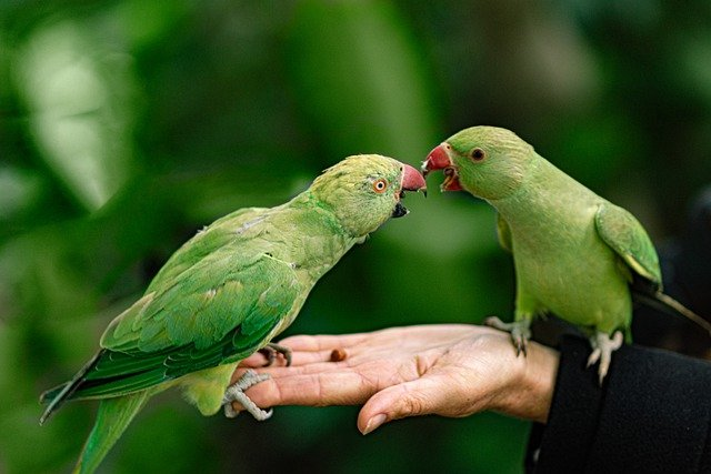 Pictures of Pet Birds - An Important Source of Information For Pet Owner