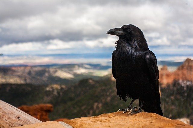 A bird sitting on top of a mountain