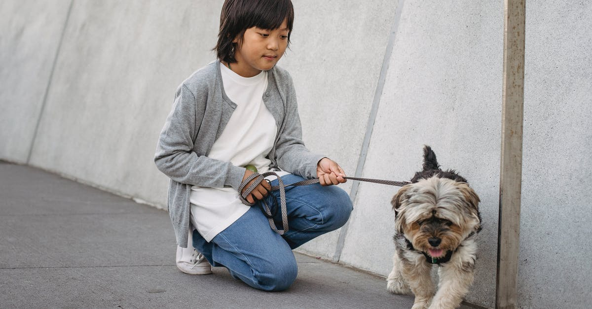 A person with a dog on a leash