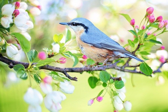 A small bird perched on a tree branch