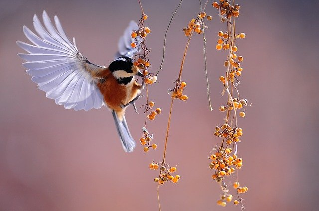 A bird hanging off the side of a flower