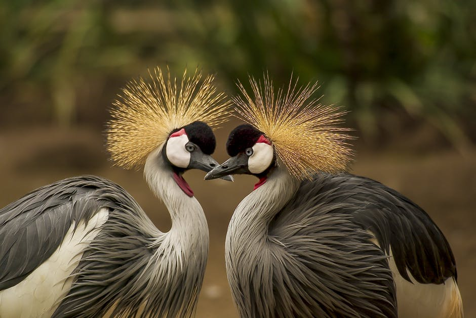 A bird standing on top of each other