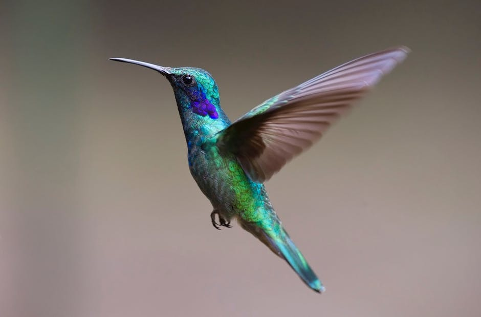 A colorful bird perched on top of a hummingbird