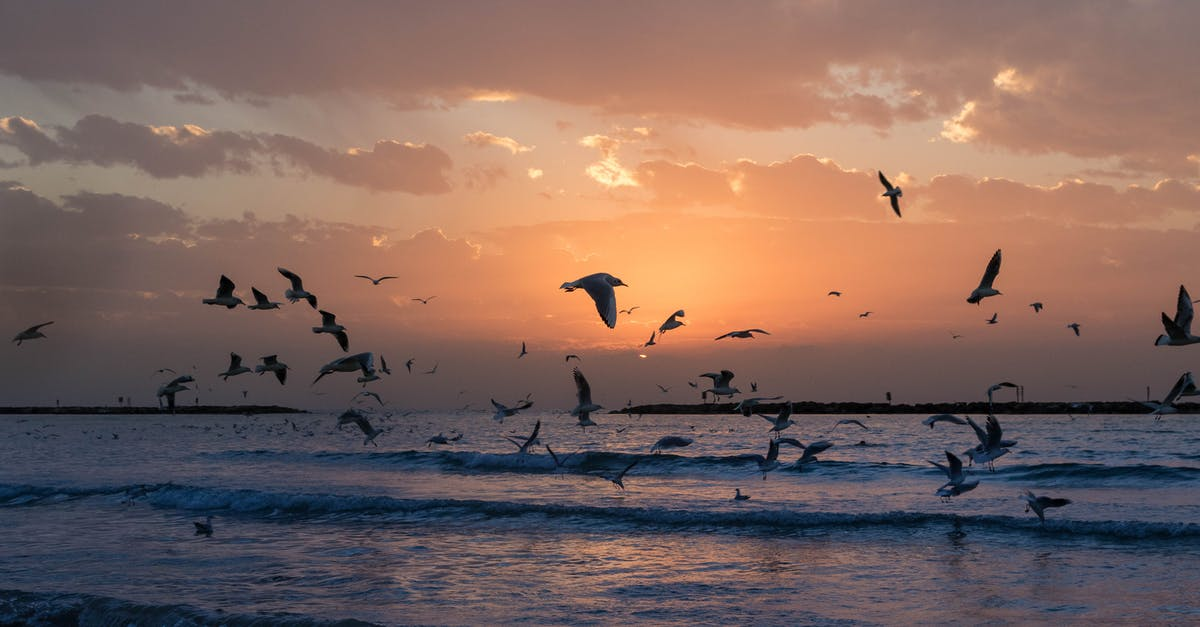 A flock of seagulls flying over a beach