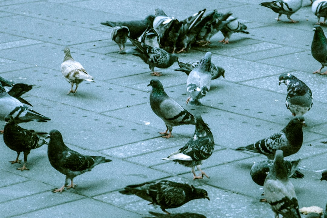A flock of seagulls are standing in a parking lot