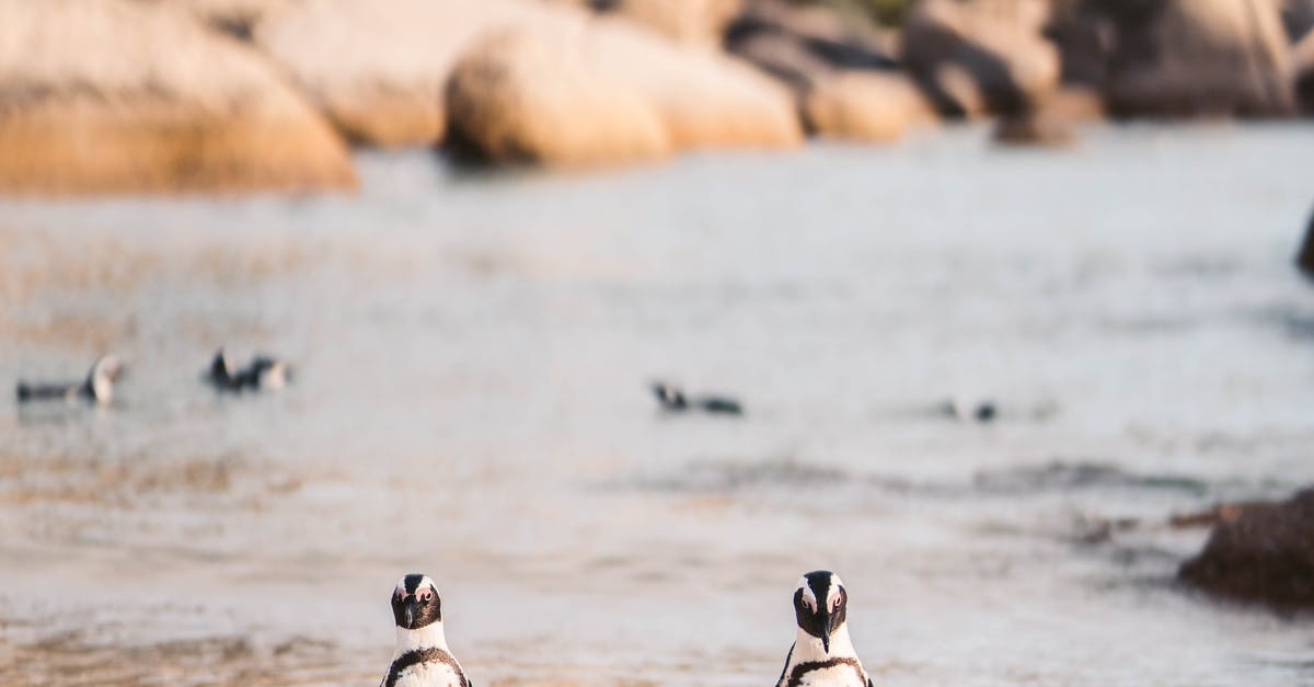 A penguin walking on the beach
